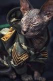Varma kläder för ung kattunge royaltyfria bilder