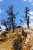 varma kolossala fjädrar för karga klippor Arkivfoton