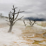 varma kolossala fjädrar yellowstone Arkivfoto
