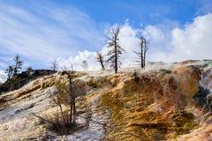 varma kolossala fjädrar yellowstone Fotografering för Bildbyråer