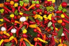 Varma kryddor på en rad Arkivbild