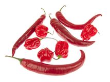 varma peppar för chili Långa och små mini- peppar Royaltyfria Foton