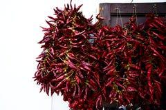 Varma röda peppar som hänger på väggen royaltyfri fotografi