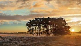 Varma solstrålar över en stillsam hed under gryning på Regte Heide, Goirle royaltyfri bild