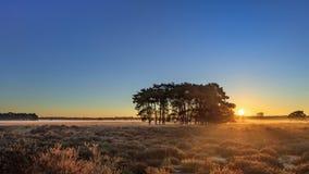 Varma solstrålar över stillsamt hed-land på gryningen, Nederländerna arkivbild