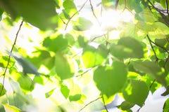 Varma solstrålar på grön lövverk Arkivfoton