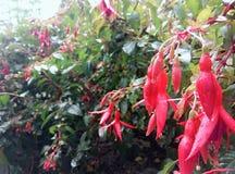 Varmt rött Royaltyfria Bilder
