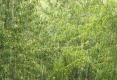 varmt regn 2 Royaltyfria Bilder