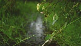 Varmt sommarregn i gräsplanen parkerar upplösning 4K Mest bra naturbakgrunder arkivfilmer