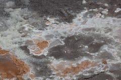 Varmvattenbakteriebakgrund Royaltyfria Foton