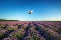 Varna, Bulgaria - June 22, 2015,: Flying drone quadcopter Dji Ph. Antom 2 with digital camera GoPro HERO4, over beautiful lavender field in Provence stock photography