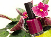 Varnishes for nails. Next to flower on a white background stock photography