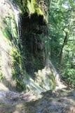 Varovitec瀑布 库存照片