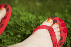 Toes with painted toenails and colorful flip flops Royalty Free Stock Image