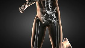 Varredura anca humana do raio X da radiografia ilustração royalty free