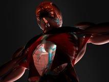 Varredura dos músculos e das artérias ilustração stock