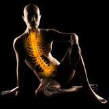 Varredura humana da radiografia Fotografia de Stock