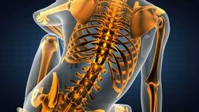 Varredura radiográfica dos ossos humanos Metragem médica ilustração royalty free