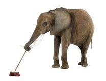 Varrer do elefante africano fotos de stock royalty free