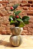 Vas från tidningar med cameliaväxten på en trätabell och wa Royaltyfria Foton