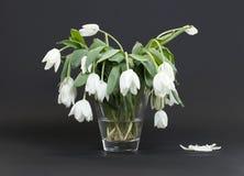 Vas mycket av droopy och döda blommor Arkivbilder