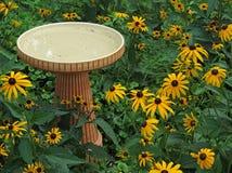 Vaschetta per i uccelli e margherite gialle, Rudbeckia Hirta Immagine Stock
