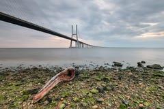 Vasco da Gama Bridge, con i bei colori di alba Immagine Stock Libera da Diritti