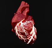 Vascular light of heart Royalty Free Stock Image