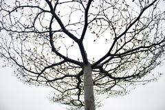 Vascular sky Stock Images