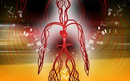 Vascular system Royalty Free Stock Image