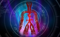 Vascular system Stock Images