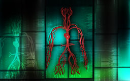 Vascular system Royalty Free Stock Image