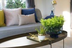 Vase à plante verte sur la table avec le coussin coloré sur le sofa images libres de droits