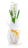 vase άνοιξη γυαλιού λουλο&ups Στοκ φωτογραφίες με δικαίωμα ελεύθερης χρήσης