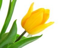 vase άνοιξη γυαλιού λουλο&ups Στοκ Εικόνες