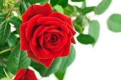 vase άνοιξη γυαλιού λουλο&ups Στοκ φωτογραφία με δικαίωμα ελεύθερης χρήσης