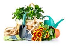 vase άνοιξη γυαλιού λουλο&ups Στοκ Εικόνα