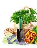 vase άνοιξη γυαλιού λουλο&ups Στοκ Φωτογραφίες