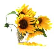 vase λουλουδιών κίτρινο Στοκ Εικόνες
