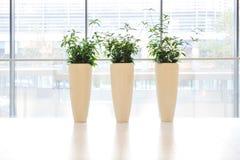 vase πράσινων φυτών Στοκ εικόνες με δικαίωμα ελεύθερης χρήσης