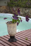 Vase. A vase with flowers in a pool Stock Photo