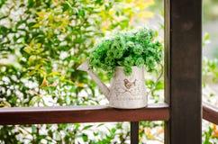 vase Fotografering för Bildbyråer