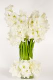 Vase of Amaryllis Royalty Free Stock Photography