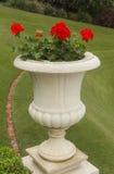 Vase av blommor Royaltyfri Foto
