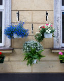 Vase avec des fleurs de ressort Photo libre de droits