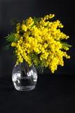 Vase avec la mimosa sur un fond noir Photographie stock
