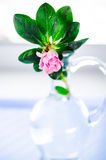 Vase with azalia Royalty Free Stock Image
