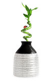 Vase with bamboo Royalty Free Stock Photography