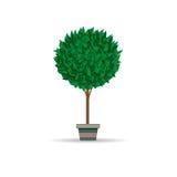Vase, Baum Lizenzfreies Stockbild
