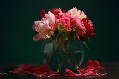 Vase with beautiful peony flowers on table. Against dark background Stock Images